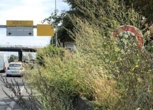 radar-vegetation-avocat-permis-conduire-dehan-schinazi